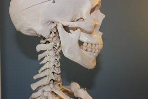 skull-778075_640